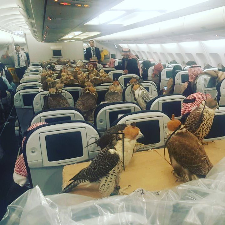 Sadly, none of the hawks got a window seat.