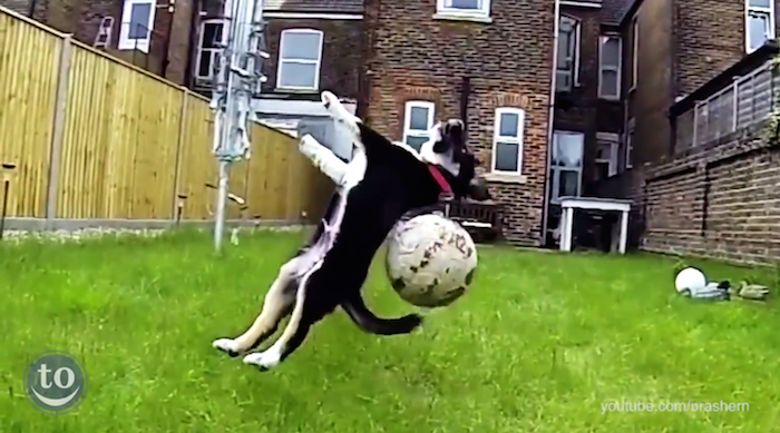Here are a whole bunch of dogs who are the absolute WORST at playing fetch.