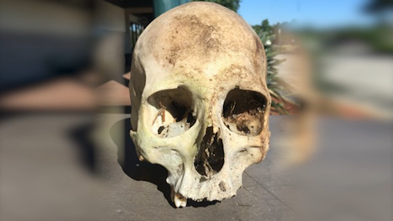 A homeless man announced he found a dead body by puppeteering the skull in a Publix supermarket.