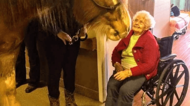 So a horse walks into a nursing home ... and the photo is priceless.