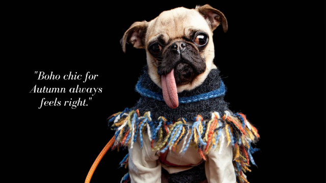 I went to a dog fashion show and rubbed shoulders with some of the hottest dogs in fashion.