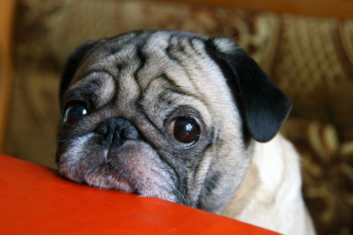10 reasons why you're still a single dog.