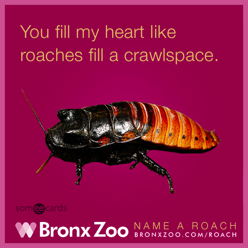 The Bronx Zoo's Roach-themed Valentine's Day Promotion Is