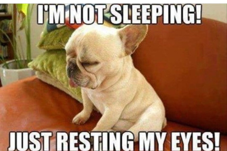 28 Memes That Will Only Be Funny If You Have A Dog.