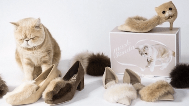 Extremely ambitious and Instagram-famous cat debuts his own line of shoes.
