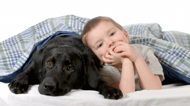 Service dog 'Jedi' uses the sniffing force to save the life of sleeping boy with type 1 diabetes.