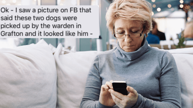 Mom proves she doesn't know what the family dog looks like in hilarious tweet.