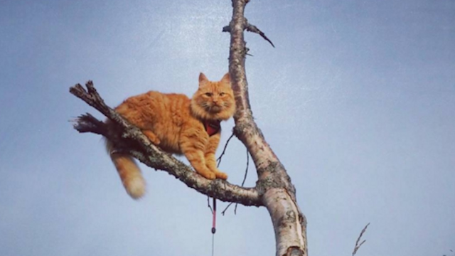 Jesper the amazing adventure cat has done more outdoors stuff this winter than you.