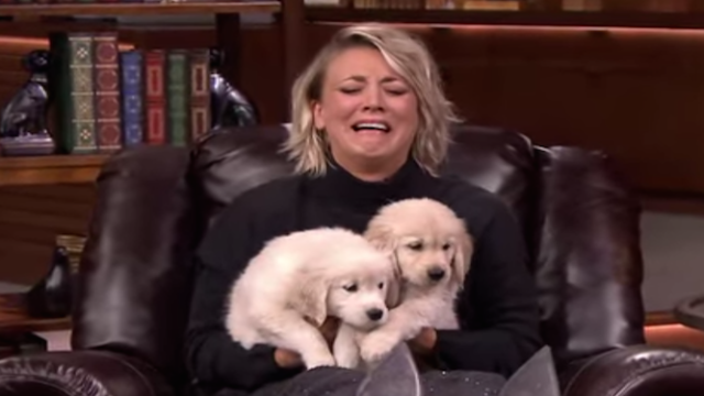 Kaley Cuoco-Sweeting and Jimmy Fallon play puppy trivia with puppies, for puppies.