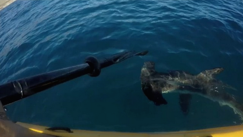 This badass kayaker fought an aggressive shark for 15 minutes.