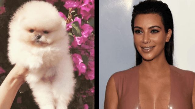 Kim Kardashian asked Twitter if she should name her puppy 'Baby Jesus.' Twitter had other ideas.