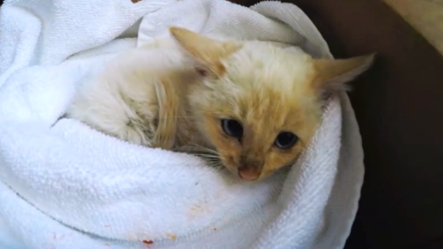 2015's most heart-pounding GoPro clip was a man resuscitating a tiny kitten found in the snow.