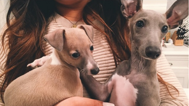Kylie Jenner's dog-loving Instagram followers got her investigated by Animal Control.