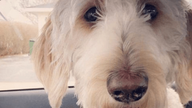 Missing dog has emotional reunion with family after airline loses him multiple times.
