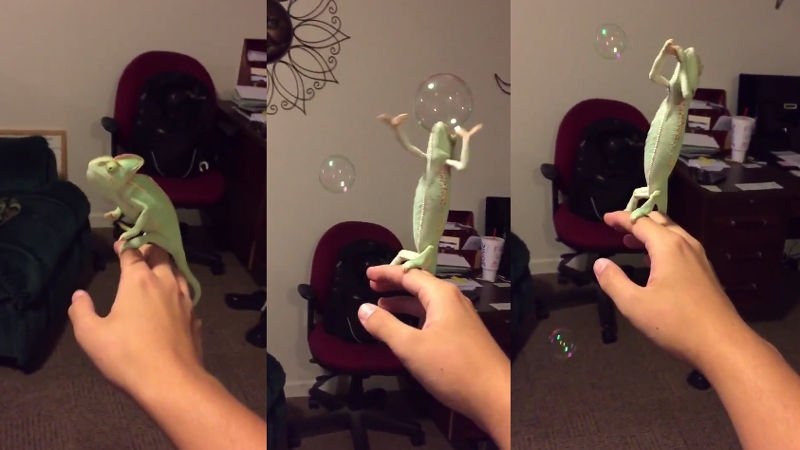 Let this bubble-popping lizard be your weekend spirit animal.