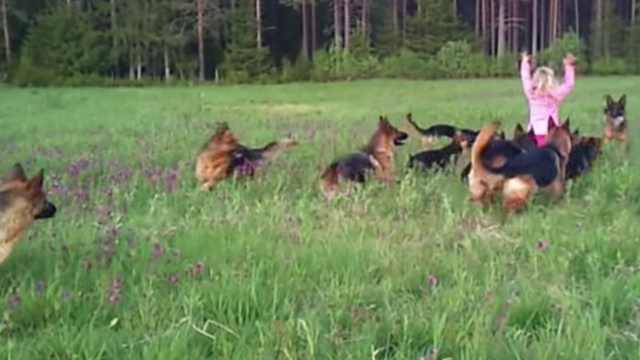 A little girl once frolicked with 14 German Shepherds and you should probably see it.