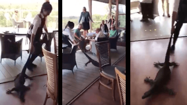 Watch this fearless waitress drag a 6-foot lizard out of her restaurant.