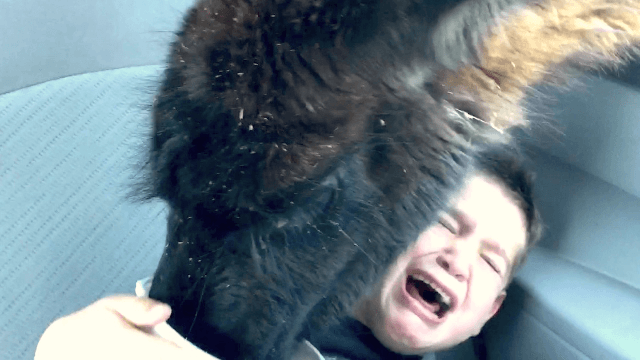 Dad laughs and films as horrified son is 'attacked' by vicious llama.