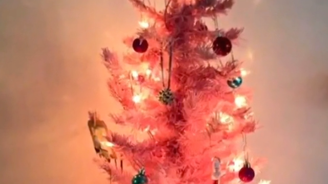 Teacher who was told to take down her pink classroom Christmas tree wins after rant about PC culture.