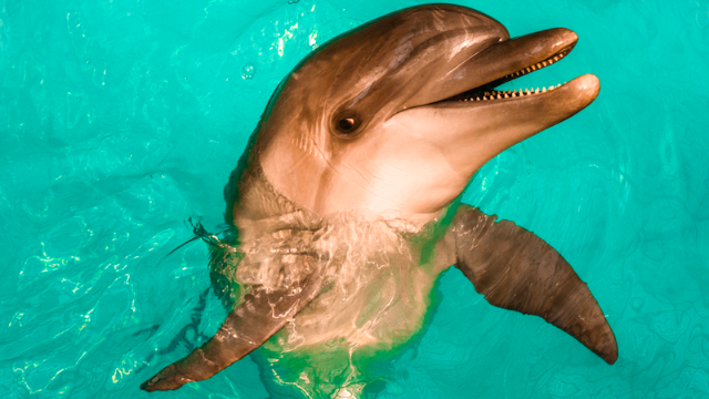 A man and a dolphin got into a spitting fight. Some say they're still spitting to this day.