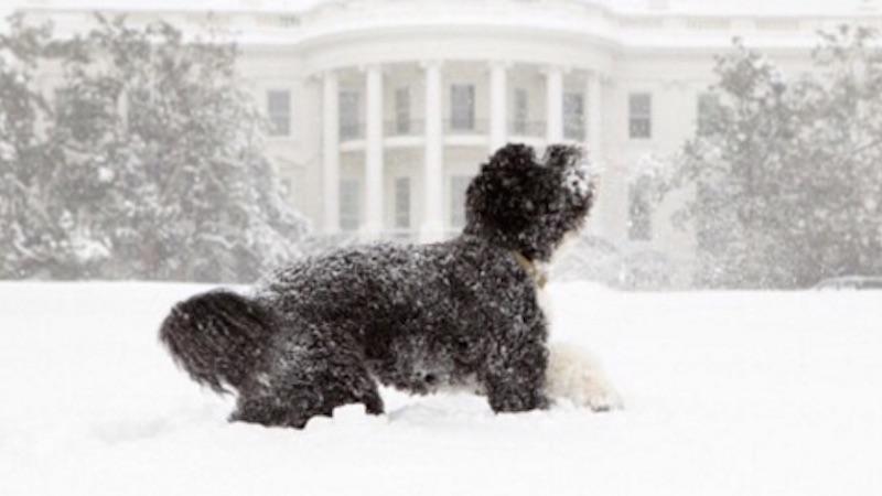 Secret Service arrested a man for plotting to kidnap Bo Obama.