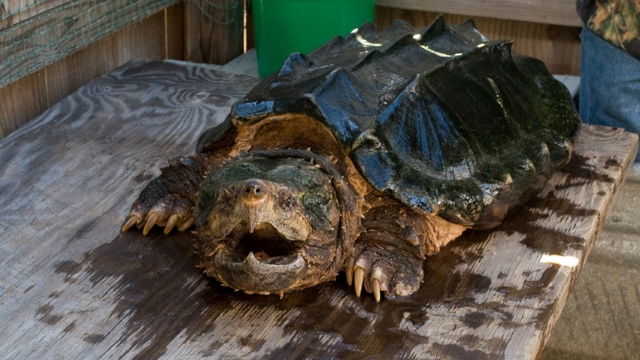 Meet Robert Crosland, the teacher who allegedly fed a puppy to a snapping turtle.