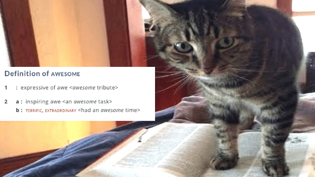 11 times the Merriam-Webster dictionary was the definition of awesome on Twitter in 2016.