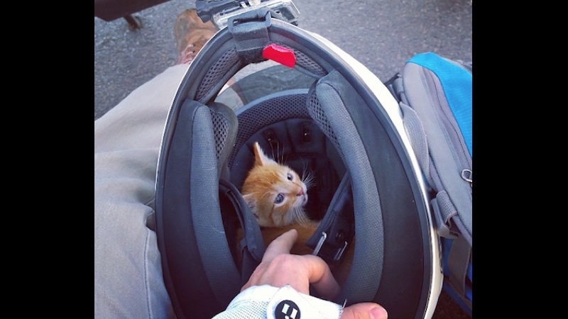 Kickass lady motorcyclist stops traffic to rescue terrified kitten in middle of busy intersection.