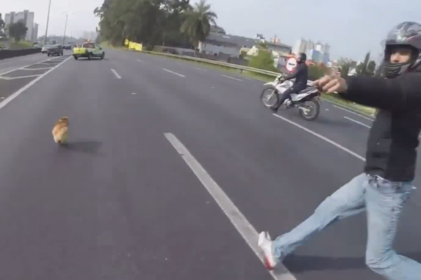 Motorcycle gang saves dog by risking their lives in highway traffic.