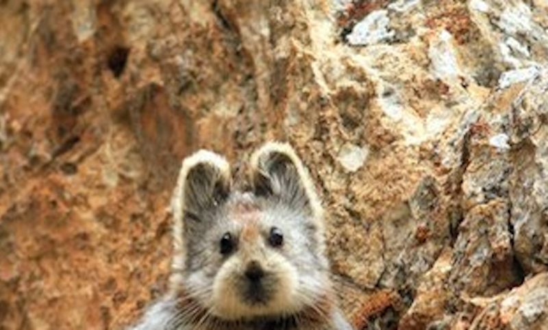 """Incredibly rare """"teddy bear""""-faced animal allows humans to glimpse it after 20 years."""