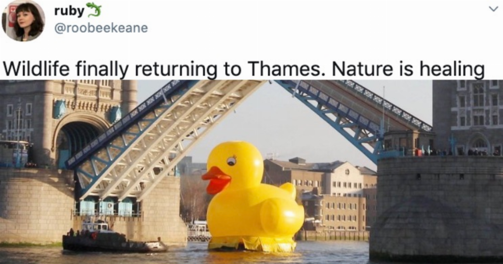 18 of the funniest memes about how 'nature is healing' during the pandemic.