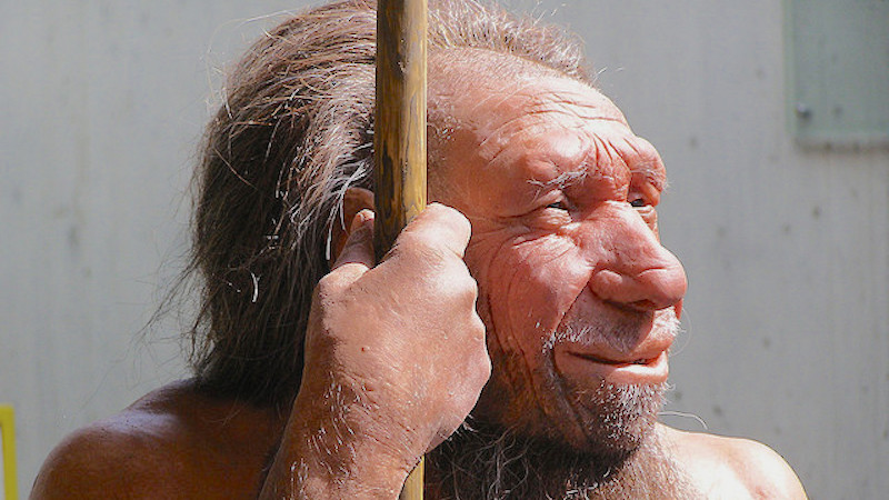 You can blame your allergies on your ancestors having sex with Neanderthals.