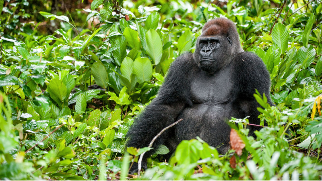Netflix wants people to stop asking if they have The Gorilla Channel, because the internet has no chill.
