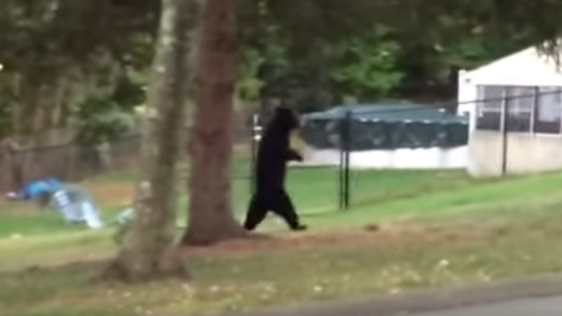 That eerie bipedal bear is back to make you wonder what it means to be human.