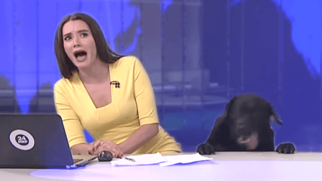 News anchor freaks out after dog crashes live broadcast: 'I'm actually a cat lady!'