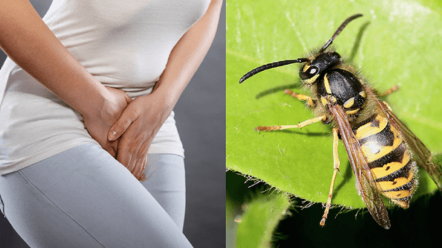 Women are putting wasp nests in their vaginas for a reason that doesn't make it any better.