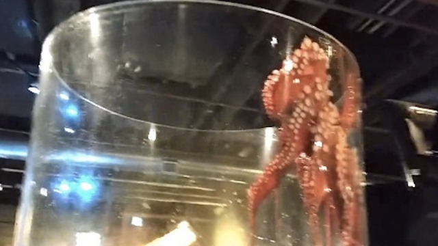 Prepare yourself for the coming invasion: 9 times octopuses tried to take over the world.