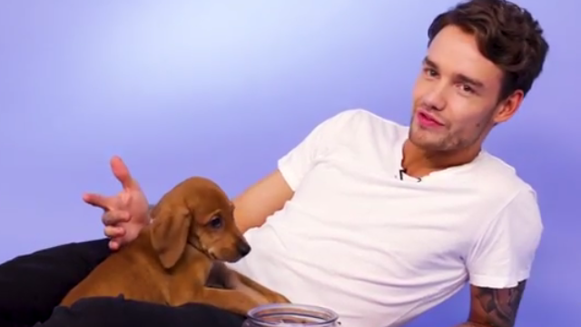 One Direction Reunion Tour Planned? Liam Payne Talks About Possibility