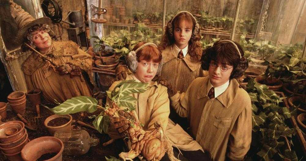 Online Hogwarts School Is Searching For A Qualified Herbology