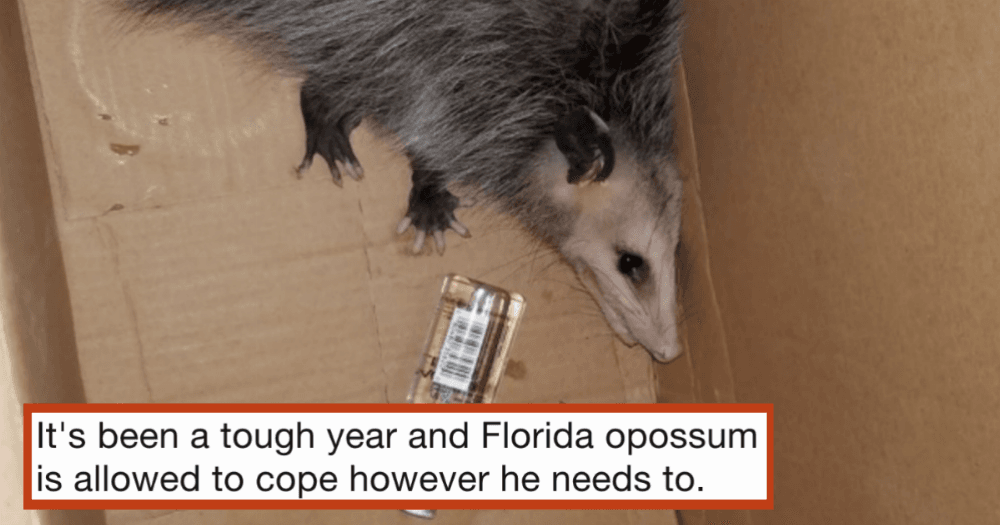 An opossum broke into a Florida liquor store and got wasted  Twitter