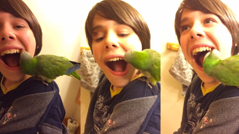 "Parrot pulls out boy's loose tooth, makes you yell ""Ahhh! No!"""