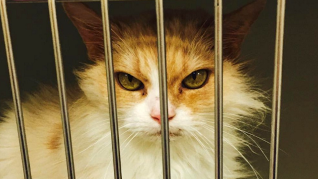 The Internet's newest cat star is not grumpy. She's really, really angry.