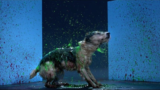 Dogs painting with their fur in slow-motion is great. Doing it to save other dogs is even better.