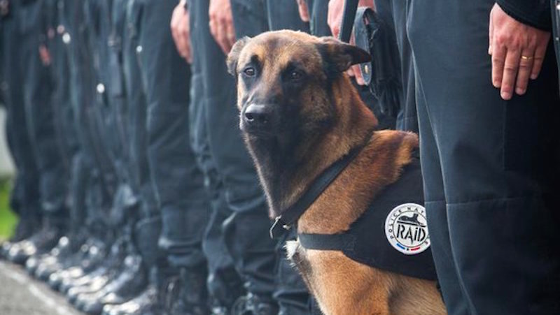 French cops post moving memorial for police dog killed in this morning's anti-terror raid.