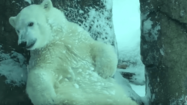 No one is happier about the snow in Portland than these zoo animals.