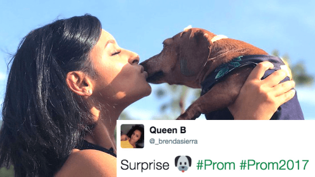 This teen made a matching prom dress for her dog and Twitter can't handle it.