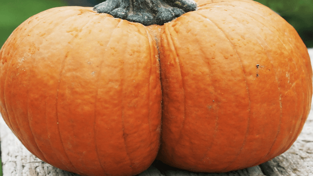 Moms are painting pumpkins on their babies' butts. Not everybody thinks it's cute.