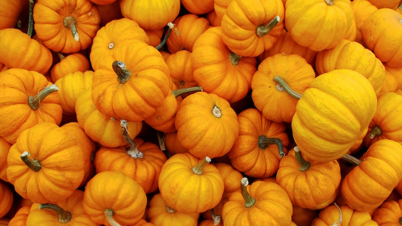 The street value of these pumpkins is $6 million.