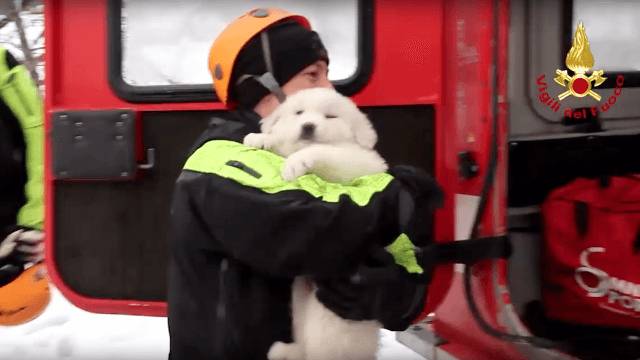 Three adorable puppies rescued from avalanche in Italy 'gives us hope,' say rescuers.