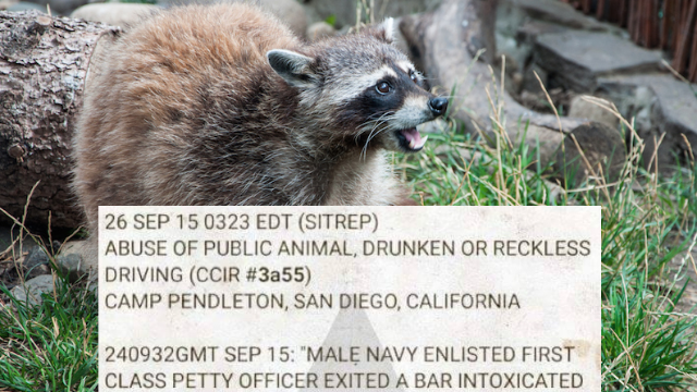 This police report of a man stealing a raccoon to start a car is the year's best short story.